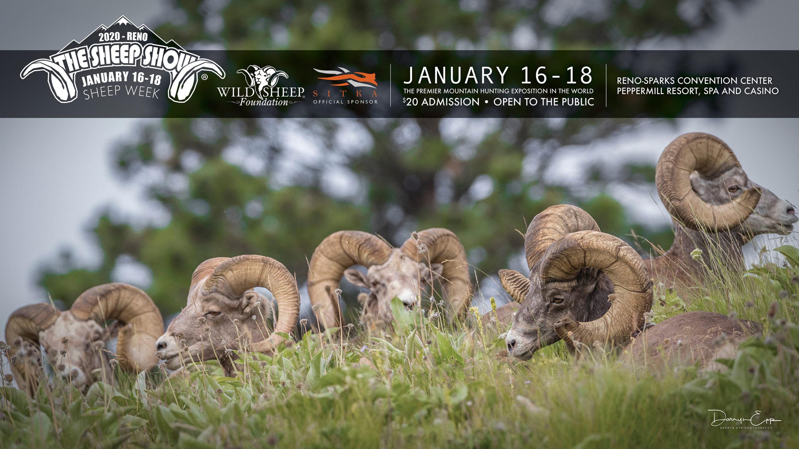 Sheep Week Is Here!