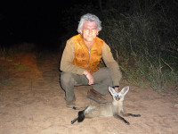 bat-eared-fox-2