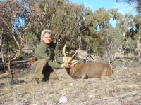 hog-deer