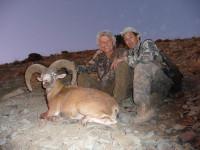 iran-red-sheep