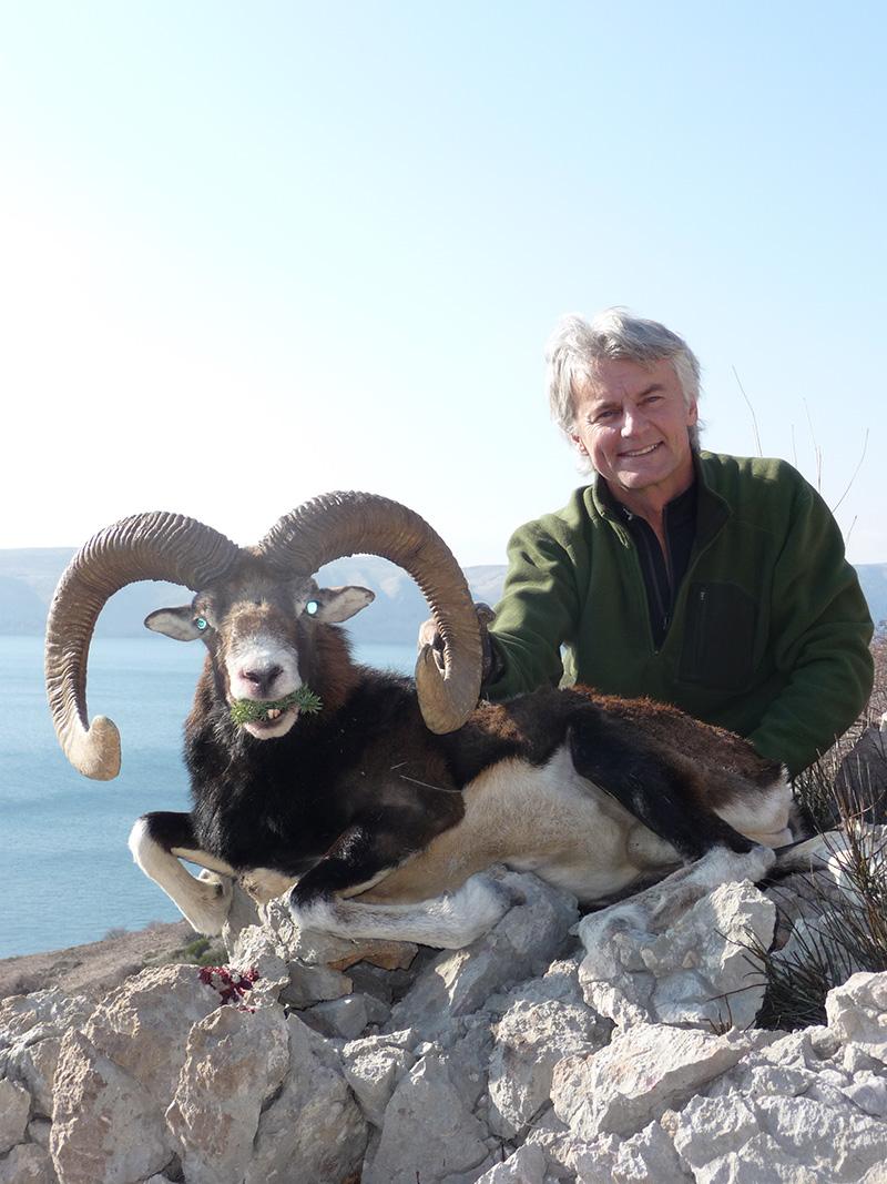 croatian-mouflon