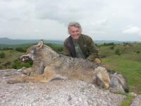 european-wolf