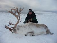 arctic-caribou