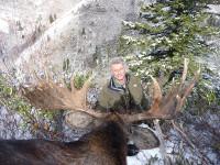 shiras-moose