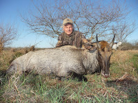 texas-free-range-nilgai