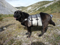 yukon-pack-dog