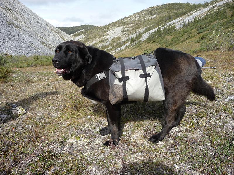 yukon-pack-dog