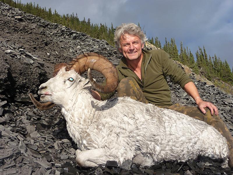 fannin-sheep