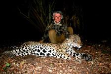 darted-jaguar